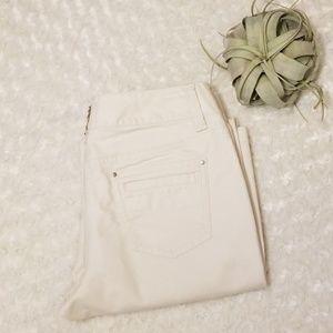 Ann Taylor Lindsay Bootcut pants